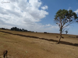 Ethiopian farmers depend on Rain water to feed the country